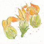 Corgette_Flowers